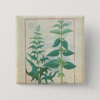 Urticaceae Pinback Button