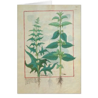 Urticaceae Tarjeta De Felicitación