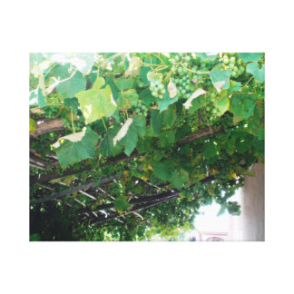 Uruguay Grape Vine Canvas Print