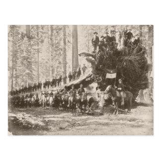 US Calvary protecting National Parks Postcard