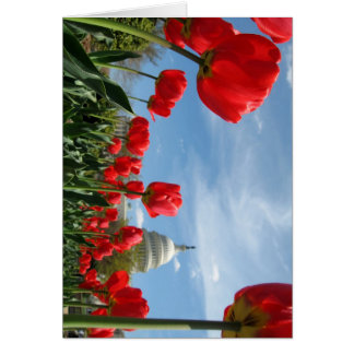US Capitol Building Spring photo Card