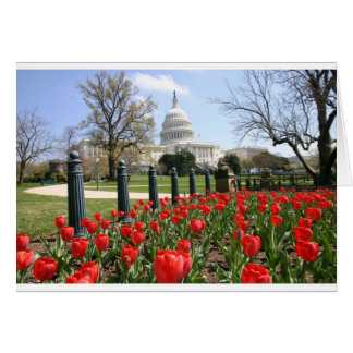 US Capitol spring flower Card