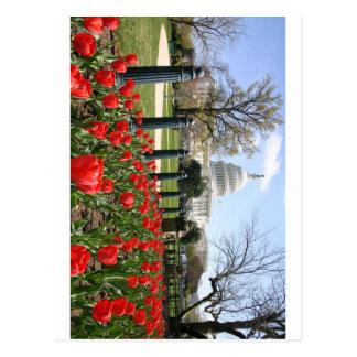 US Capitol spring flower Postcard