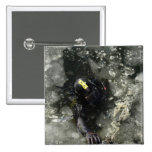 US Navy Diver 2 Inch Square Button
