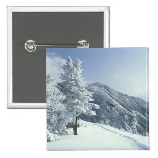 US, NH, Snow covered trees Trails Snoeshoe Button