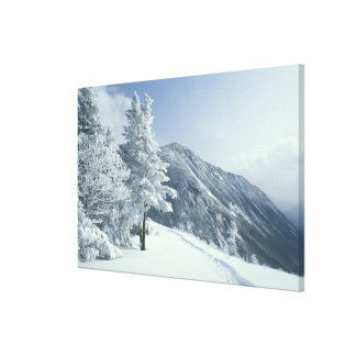 US, NH, Snow covered trees Trails Snoeshoe Canvas Print