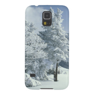 US, NH, Snow covered trees Trails Snoeshoe Galaxy S5 Cover