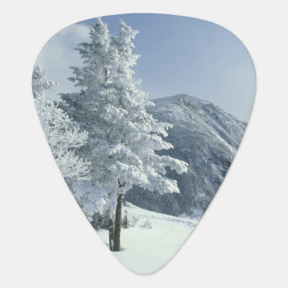 US, NH, Snow covered trees Trails Snoeshoe Guitar Pick
