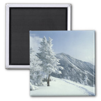 US, NH, Snow covered trees Trails Snoeshoe Magnet