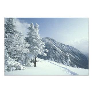 US, NH, Snow covered trees Trails Snoeshoe Photo Print