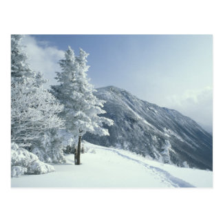 US, NH, Snow covered trees Trails Snoeshoe Postcard