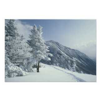 US, NH, Snow covered trees Trails Snoeshoe Poster