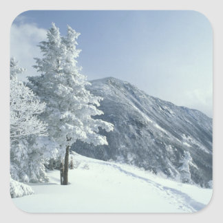 US, NH, Snow covered trees Trails Snoeshoe Square Sticker