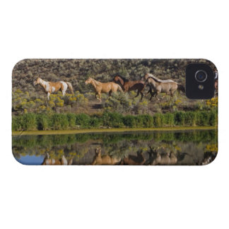 US, Oregon, Seneca, Ranch living at The 2 Case-Mate iPhone 4 Cases
