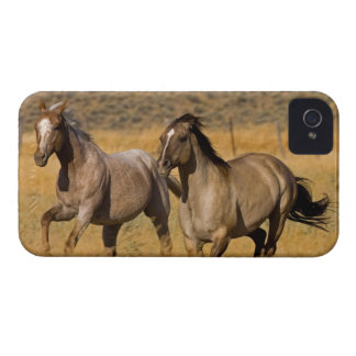 US, Oregon, Seneca, Ranch living at The Case-Mate iPhone 4 Cases
