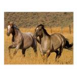 US, Oregon, Seneca, Ranch living at The Postcards