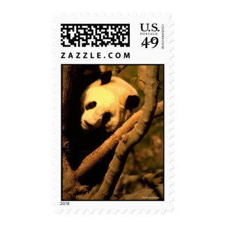 US STAMP Giant Panda, Photo By John A. Syl...