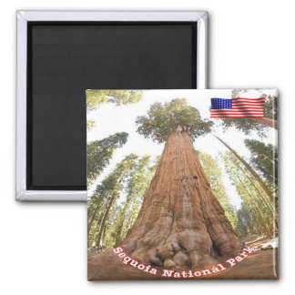US U.S.A. National Park Sequoia - General Sherman 2 Inch Square Magnet