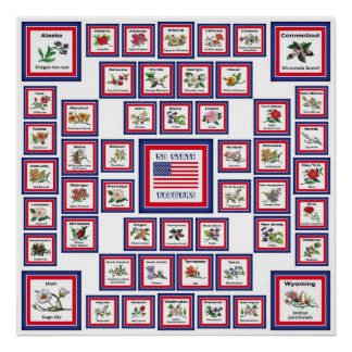 USA 50 STATE FLOWERS WHITE/559 POSTER