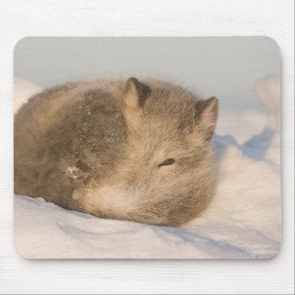 USA, Alaska, 1002 Coastal Plain of the ANWR. An 2 Mouse Pad
