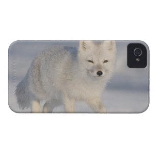USA, Alaska, 1002 Coastal Plain of the ANWR. An 3 Blackberry Bold Case