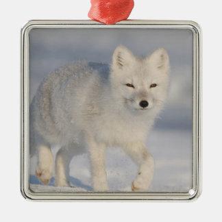 USA, Alaska, 1002 Coastal Plain of the ANWR. An 3 Square Metal Christmas Ornament