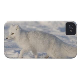 USA, Alaska, 1002 Coastal Plain of the ANWR. An 4 Blackberry Bold Case