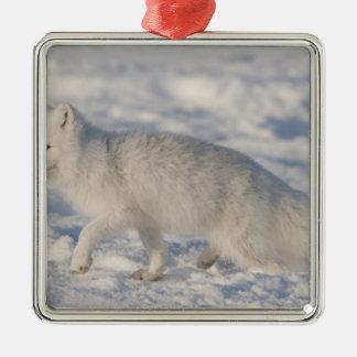 USA, Alaska, 1002 Coastal Plain of the ANWR. An 4 Square Metal Christmas Ornament