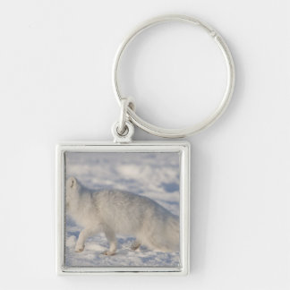 USA, Alaska, 1002 Coastal Plain of the ANWR. An 4 Silver-Colored Square Keychain