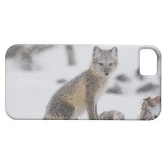 USA, Alaska, 1002 Coastal Plain of the ANWR. An 5 iPhone 5 Case