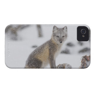 USA, Alaska, 1002 Coastal Plain of the ANWR. An 5 Blackberry Cases