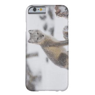 USA, Alaska, 1002 Coastal Plain of the ANWR. An 5 Barely There iPhone 6 Case