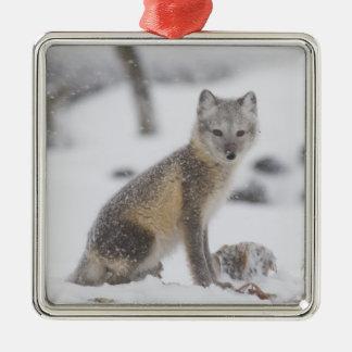 USA, Alaska, 1002 Coastal Plain of the ANWR. An 5 Square Metal Christmas Ornament