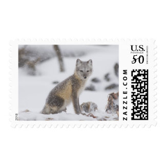 USA, Alaska, 1002 Coastal Plain of the ANWR. An 5 Postage