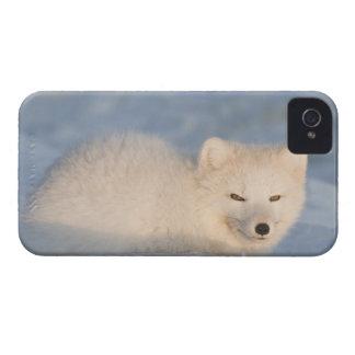 USA, Alaska, 1002 Coastal Plain of the ANWR. An Case-Mate Blackberry Case