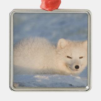 USA, Alaska, 1002 Coastal Plain of the ANWR. An Square Metal Christmas Ornament