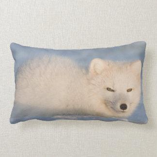 USA, Alaska, 1002 Coastal Plain of the ANWR. An Pillow