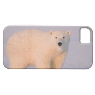 USA, Alaska, 1002 Coastal Plain of the Arctic 2 iPhone SE/5/5s Case
