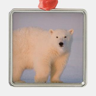 USA, Alaska, 1002 Coastal Plain of the Arctic 2 Square Metal Christmas Ornament