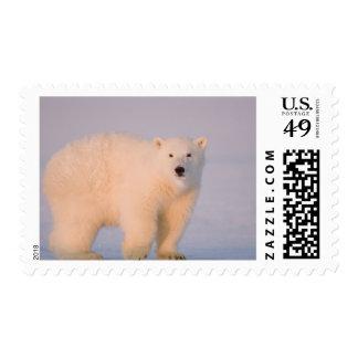 USA, Alaska, 1002 Coastal Plain of the Arctic 2 Postage