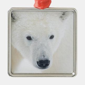USA, Alaska, 1002 Coastal Plain of the Arctic 3 Square Metal Christmas Ornament