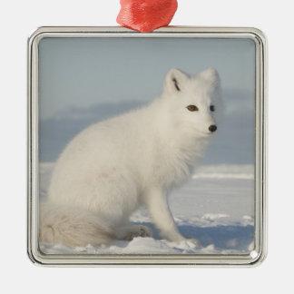 USA, Alaska, 1002 Coastal Plain of the Arctic 4 Square Metal Christmas Ornament