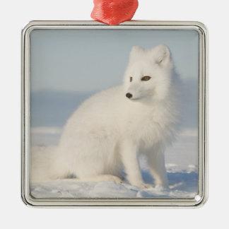USA, Alaska, 1002 Coastal Plain of the Arctic 5 Square Metal Christmas Ornament