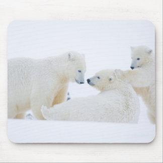 USA, Alaska, 1002 Coastal Plain of the Arctic Mouse Pad