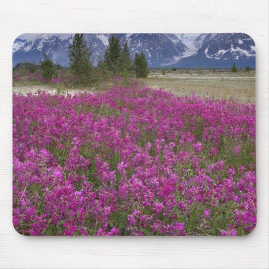 USA, Alaska, Alsek River Valley. View of Mouse Pad