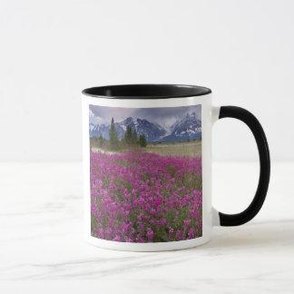 USA, Alaska, Alsek River Valley. View of Mug