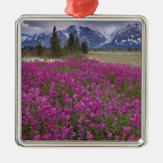 USA, Alaska, Alsek River Valley. View of Ornaments