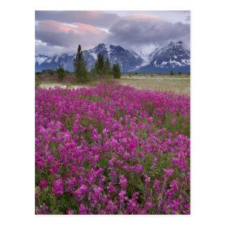 USA Alaska Alsek River Valley View of Postcard