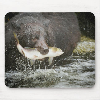 USA, Alaska, Anan Creek. Close-Up Of Black Bear Mouse Pad