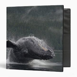 USA, Alaska, Angoon, Humpback Whale Megaptera 2 3 Ring Binder